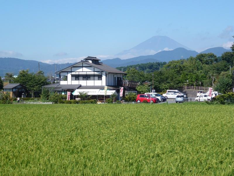 田原ふるさと公園-夏の風景